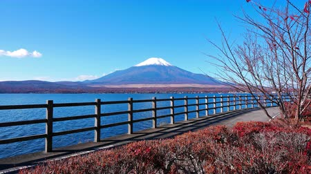 Colorful Autumn with Mountain Fuji in Japan Lake Yamanakako