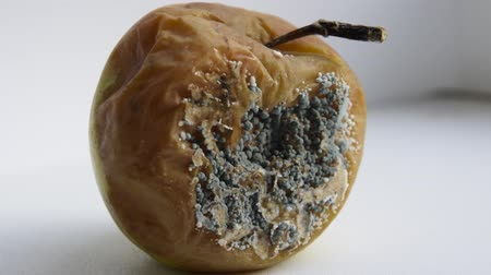 moldy : A rotten apple, covered with mold Stock Footage