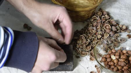 avelã : Chipping the hazelnuts with a hammer on the table. Smoothing of hazelnut on a slaty substrate.