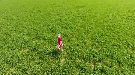 vigorous : A beautiful young blonde girl is walking along the field of young wheat. A woman in a red T-shirt poses in front of the drony camera. He runs away from the camera and runs after her. Fun and sports on a wheat field. Stock Footage