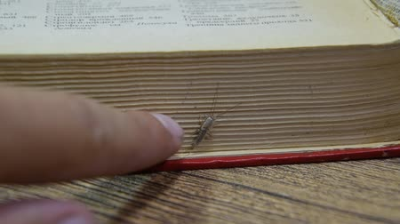 Insect feeding on paper - silverfish, thermobia. Pest books and newspapers. Стоковые видеозаписи