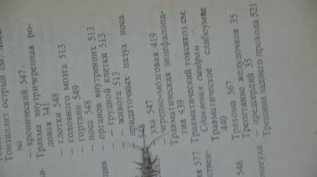 haşarat : Insect feeding on paper - silverfish. Pest books and newspapers. Lepismatidae, Thermobia domestica.