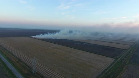 kuban : Burning straw in the fields after harvesting wheat crop.