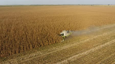 pour out : Harvester harvests corn. Collect corn cobs with the help of a combine harvester. Ripe corn on the field Stock Footage