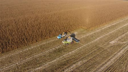 agricultural economy : Harvester harvests corn. Collect corn cobs with the help of a combine harvester. Ripe corn on the field Stock Footage