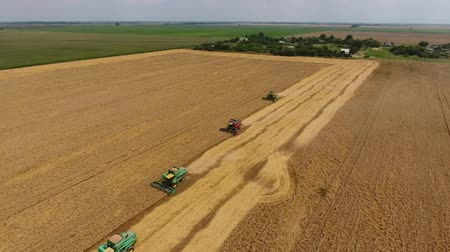 felülnézet : Harvesting wheat harvester. Agricultural machines harvest grain on the field. Agricultural machinery in operation. Stock mozgókép