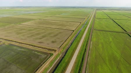 tillage : The rice fields are flooded with water. Flooded rice paddies. Agronomic methods of growing rice in the fields.