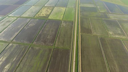 agronomist : The rice fields are flooded with water. Flooded rice paddies. Agronomic methods of growing rice in the fields.