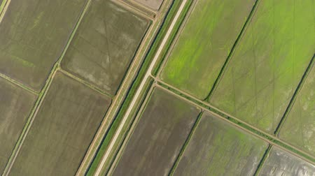 kuban : The rice fields are flooded with water. Flooded rice paddies. Agronomic methods of growing rice in the fields.