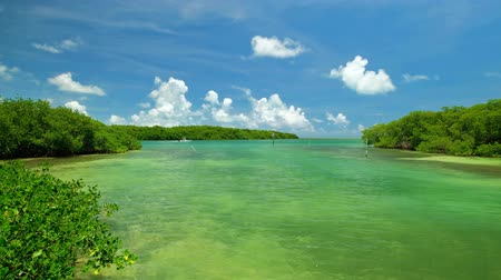 Super high definition video of the Florida Keys with mangroves and a boat cruising by. Stock mozgókép