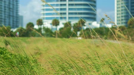 Super high definition video of a Miami Beach nature park on a windy day with soft focus and panning motion with tall condo skyscrapers in the background.