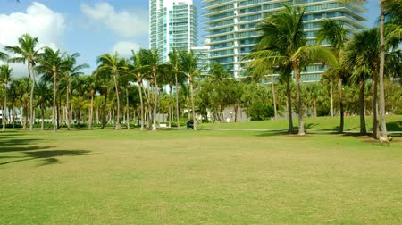 Super high definition video of a terrier dog chasing a ball at a park in popular Miami Beach with tall condo skyscrapers in the background.