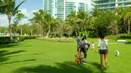 Miami Beach, Florida - February 21, 2018: Super high definition video of visitors with their dogs at a park in popular Miami Beach with tall condo skyscrapers in the background.