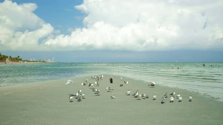 Super high definition video of a low tide sandbar with seagulls and bathers enjoying beautiful Crandon Park Beach in Key Biscayne in Miami.