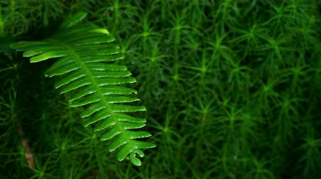 tek renkli : Fern with sunlight and shades. Closeup of branch of fern, moved by the breeze with lights and shadows in motion, over a unfocused background.