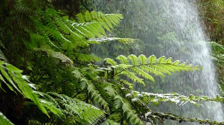 frondoso : Close-up of ferns moving by the breeze with background of falling water.Slow Motion Vídeos