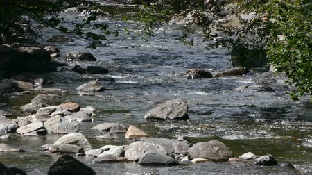 abundante : Mountain river on the Pyrenees of Andorra. River with abundant stream and boulders and with the brightness of the sun in the water. Vídeos