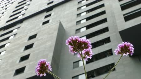 leylak : Sustainable city. Close-up of lilac flowers, moved by the wind, on a gray and unfocused background building.
