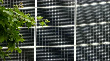 fotosentez : Solar energy, photosynthesis and wind concept of natural energies. Leaves and branches of a tree moving by the wind, on a background of solar panels.