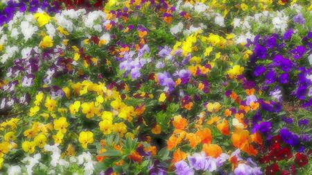 maceška : Many flowers: colorful pansies with moved by breeze.Artistic blur.Motion camera: TILT
