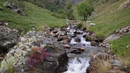 pyreneje : Mountain river flowing through a small valley in the Pyrenees of Catalonia (Spain). Dostupné videozáznamy