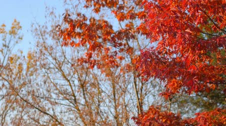 osika : Bright autumn colors