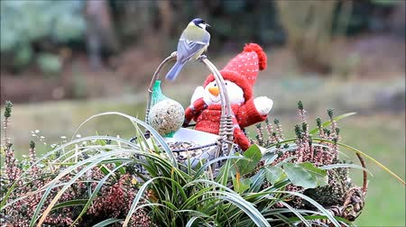 boneca : Basket with little doll and food for birds Vídeos