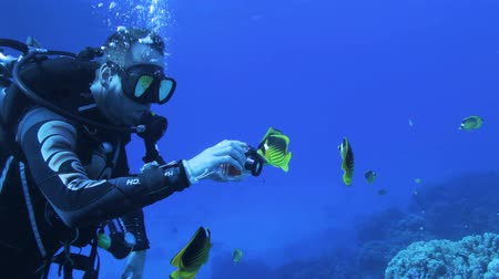 potápění : butter fly fish feeding on the diver hand