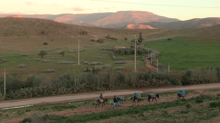 марокканский : At the Moroccan-Algerian border, donkeys carry gas cans as part of a diesel smuggling operation to take advantage of Algerias lower prices on gasoline. Other views available.