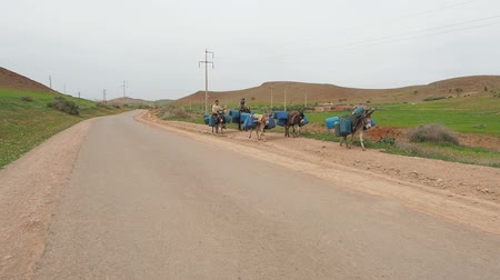 марокканский : At the Moroccan-Algerian border, donkeys carry gas cans as part of a diesel smuggling operation to take advantage of Algeria