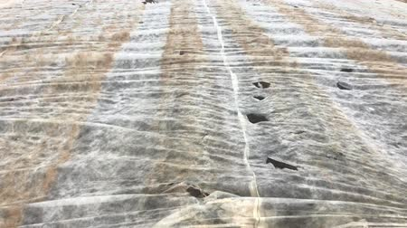 tillage : agricultural field covered by a canvas in wind