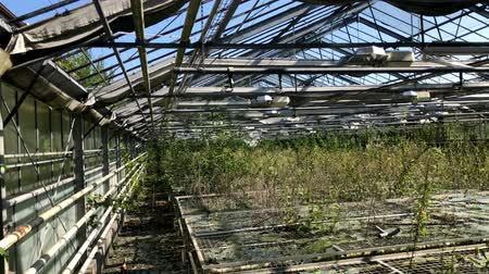 urbex : Old abandoned greenhouse