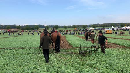 Demonstration of old fashioned ploughing technique using horses during the World Ploughing Competition in Germany 2018