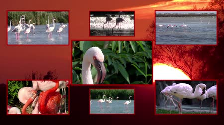 primordial : flamingos collage