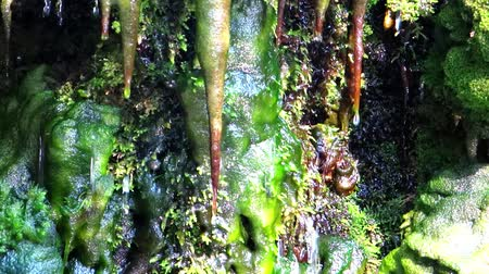 капельный : clear water dripping on mosses and stalactites