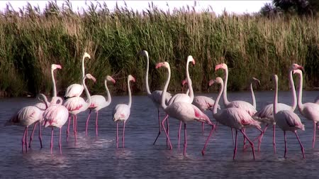 primordial : pink flamingos colony