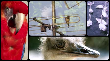 bird eye : Different species of birds collage Stock Footage
