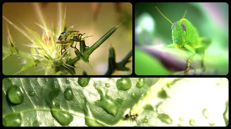 flying ants : Different kinds of insects collage