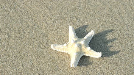 stella : kidnapped starfish Stock Footage