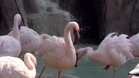primordial : pink flamingos colony near a waterfall