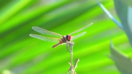angyali : Insects world. Beautiful dragonfly close up.