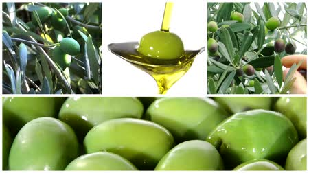 olivový olej : Collage including olive tree, olives rotating close up and olive oil on a spoon
