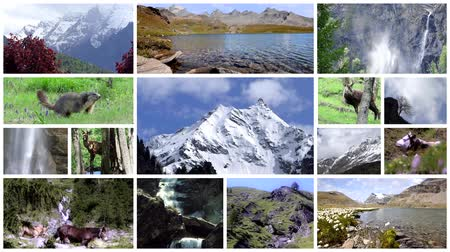 chamois : Alps montage. Landscapes, animals and people into the wild.