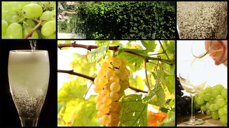 kolaj : white wine collage Stok Video