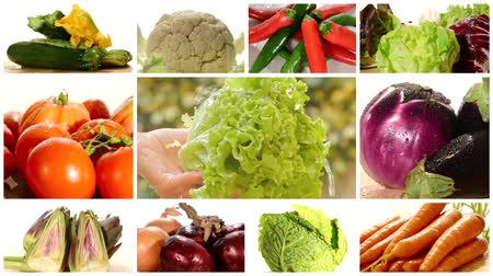 rajčata : vegetables collage including lettuce, tomato, eggplant, carrot, zucchini and others