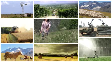 farmer animals : agriculture montage, people and animals in farmland Stock Footage