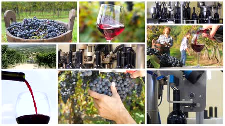 toscana : a collage including people harvesting grapes, red wine pouring into a glass and automatic bottling lines wine equipment detail.