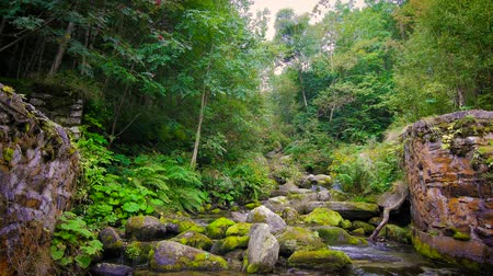 natural world : beautiful alpine stream in a sunny day Stock Footage