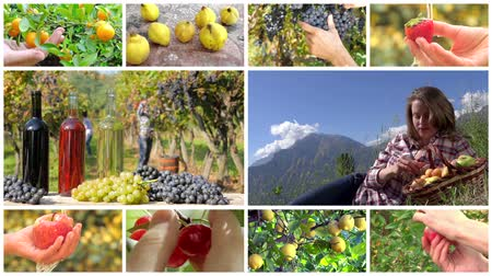 zöldségek : collage including hands harvesting diverse fruits and young women in farmland