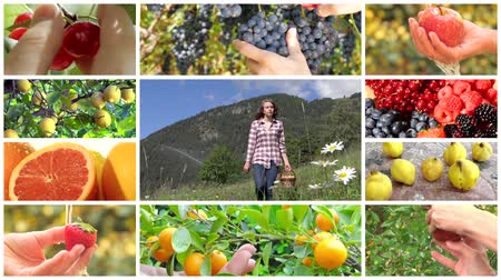 фрукты : collage including hands harvesting diverse fruits and young women in farmland